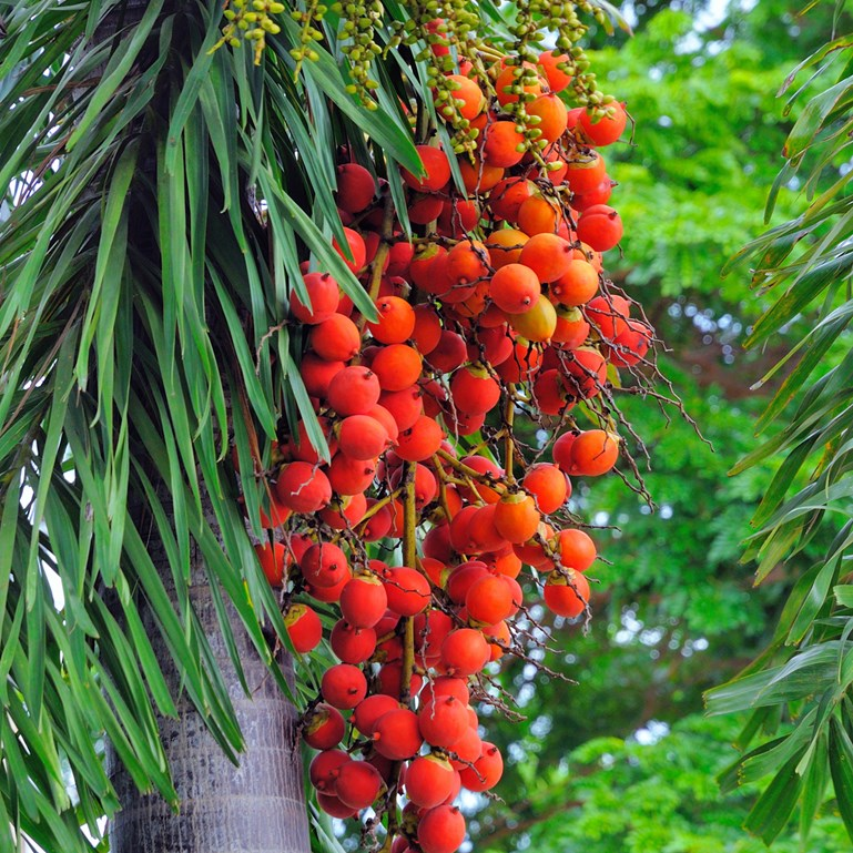 Will A Palm Oil Boycott Really Help?