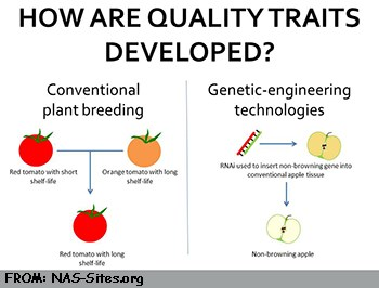 Conventional vs Genetic Engineering