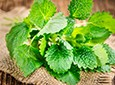 Lemon Balm Natural Skin Care