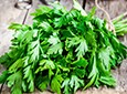 Parsley Organic Bathing Herbs