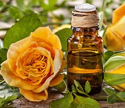 organic rose essential oil
