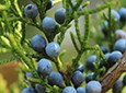 Juniper Astringent Skin Care
