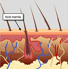 Natural Skin Care Acid Mantle