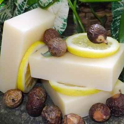 Shampoo Bar: Soapnuts Citrus Mint